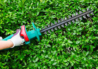 best-hedge-trimmer