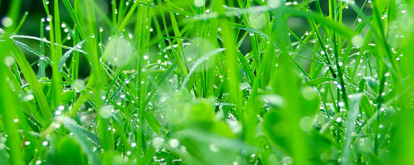 Mow Wet Grass – Bad Idea or an Option for Your Kind?