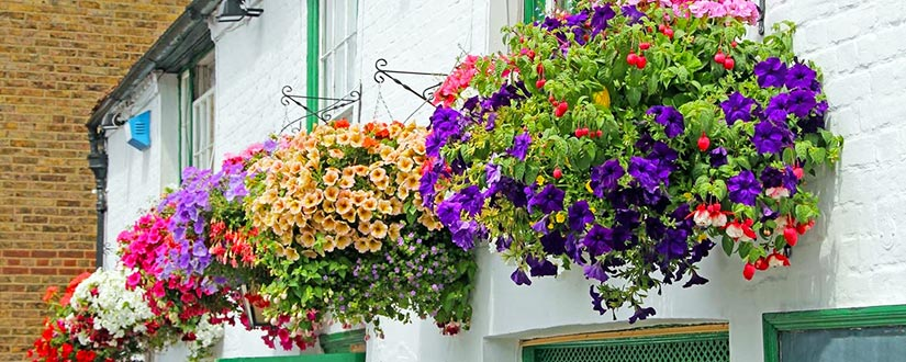 Tips to make the perfect hanging basket of flowers