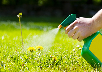 best herbicide for dandelions