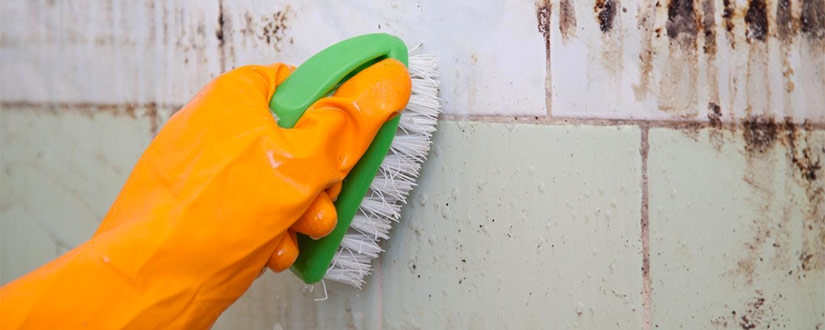 How To Get Rid Of Mold In Bathroom Before It Spreads: Simple Tips