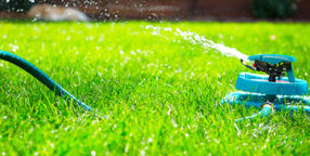 Best Time to Water Lawn