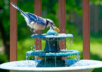 Solar Powered Bird Bath Fountain