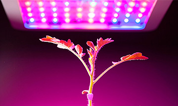 How To Choose The Best LED Grow Lights