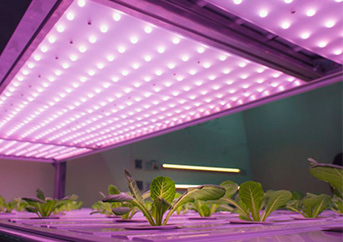 10 Best Led Grow Lights for Your Plant: Our Ultimate Guide