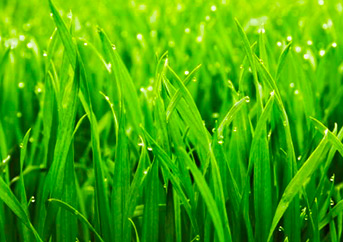 Weed And Feed For St. Augustine Grass