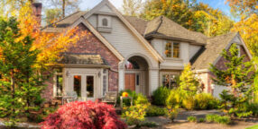 Best Trees to Plant Near House