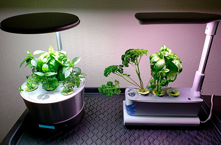 How to Clean AeroGarden
