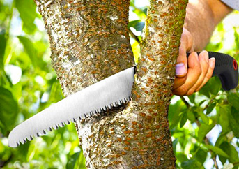 Hand Saw for Cutting Trees