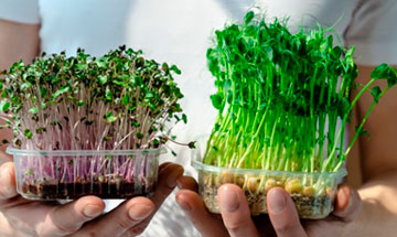 What Exactly are Microgreens