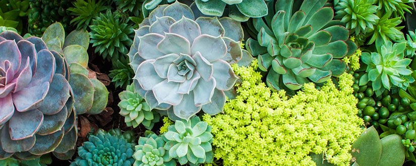 Everything You Need to Know About Rare Succulents